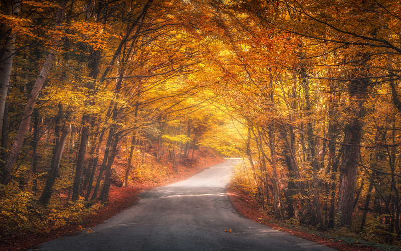 Macklin Motors Guide To Autumn Driving